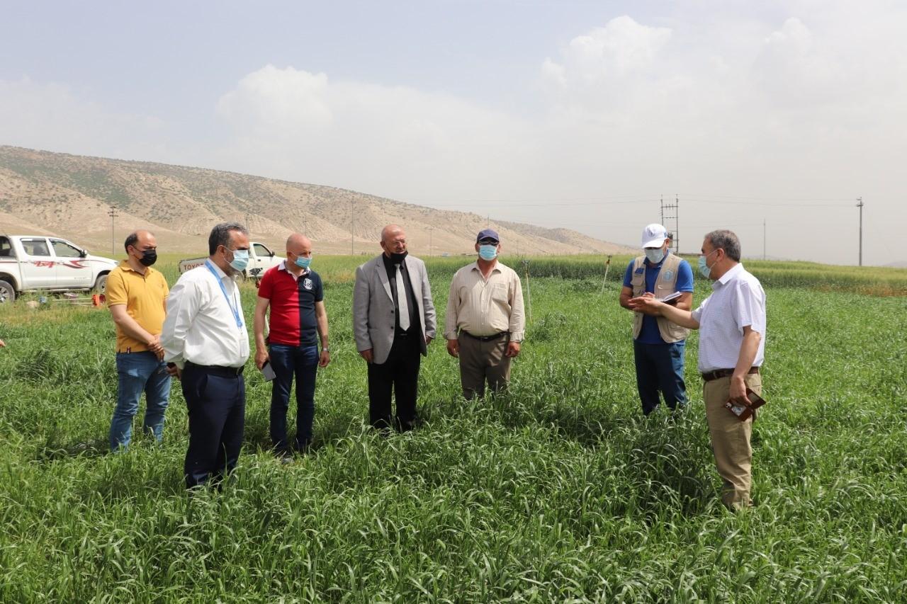 ممثل منظمة الفاو في العراق برفقته مدير زراعة نينوى يقومون بزيارة ميدانية لقرى ناحية القوش